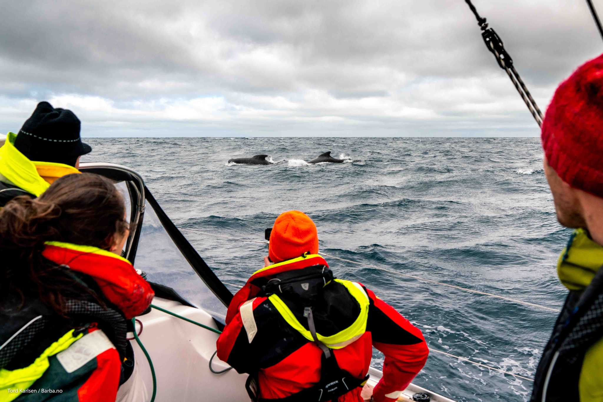 From the left, Fabrice, Diane, Hugh and Andreas enjoying the first whale observation of the expedition. Photo: Tord Karlsen / Barba.no