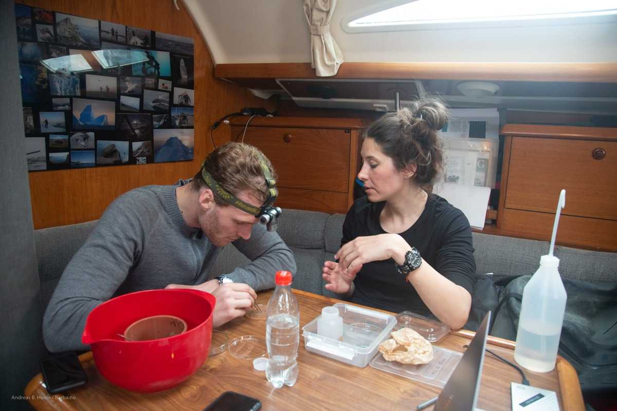 The trawl sample is subsequently stored in 70 % ethanol for later analysis. Photo: barba.no